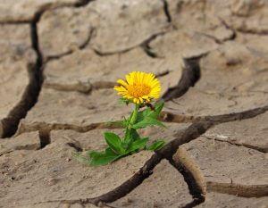 flower growing in desert