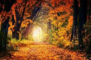 redemption path